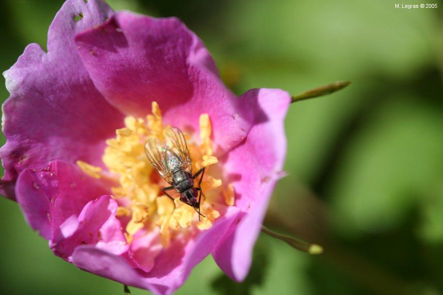 parc-jasper-flore